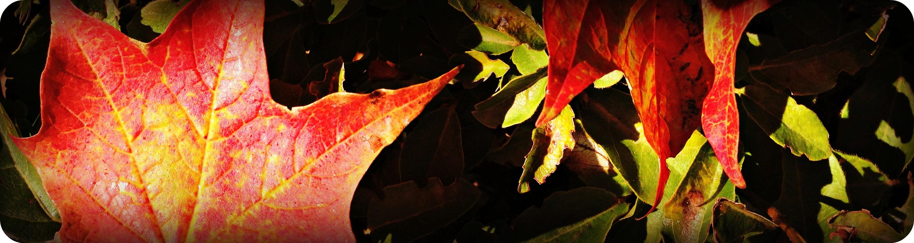Fall Leaves Header 2