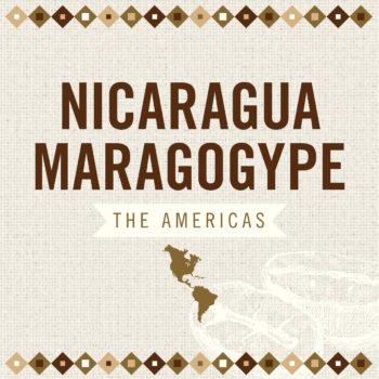 Nicaragua Maragogype AAA